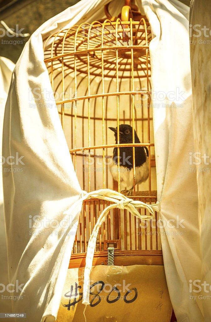 Bird For Sale stock photo