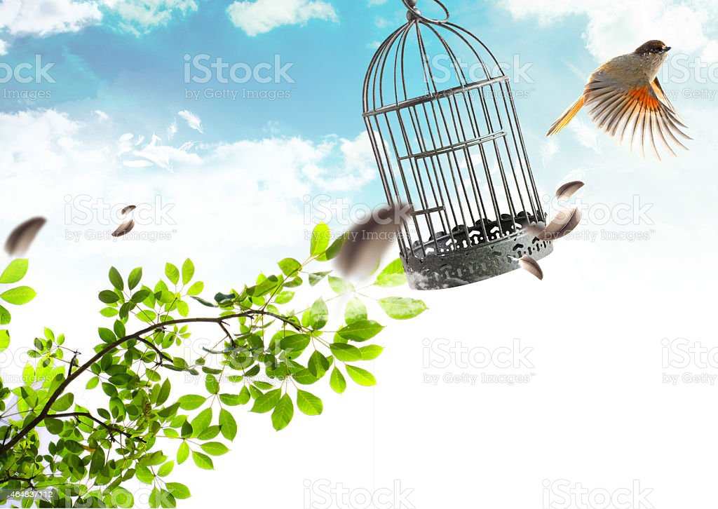 Bird free stock photo