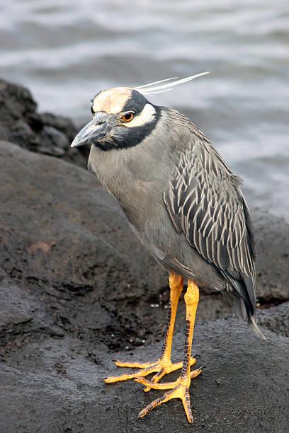 Bird, Galapagos stock photo