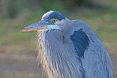 Bird along Los Angeles park lake
