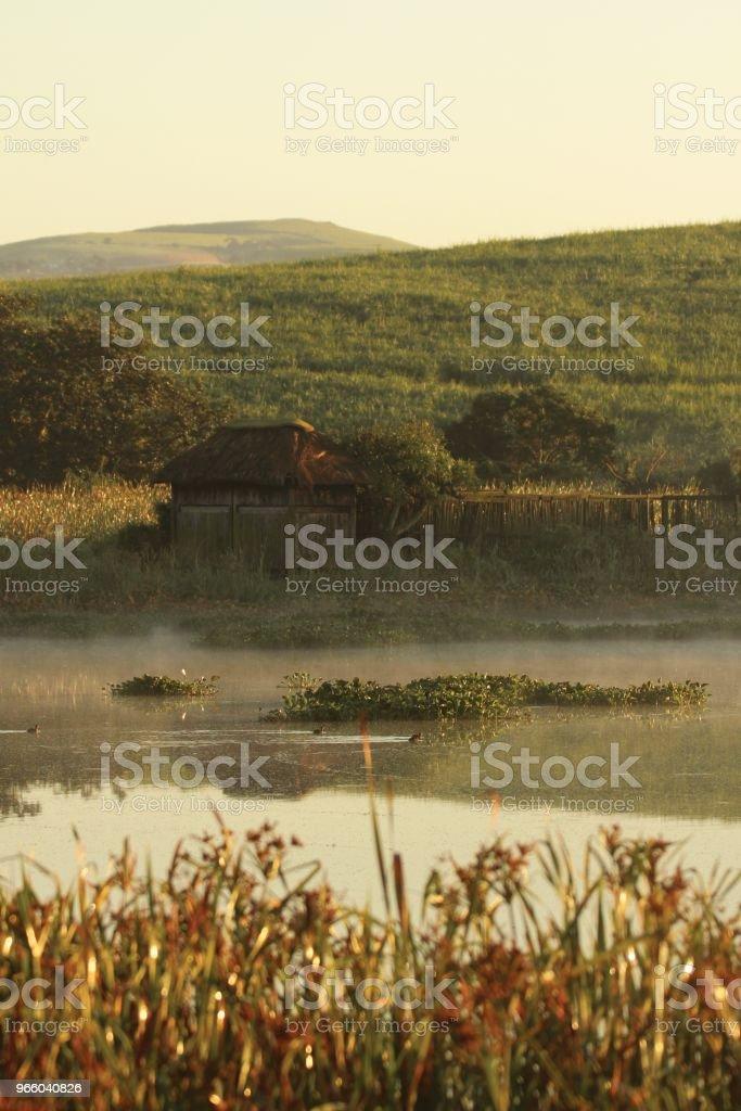 Vogel verbergen op dam - Royalty-free Boom Stockfoto