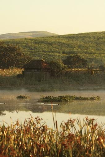 Vogel Verbergen Op Dam Stockfoto en meer beelden van Boom