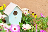 Bird house and spring flowers