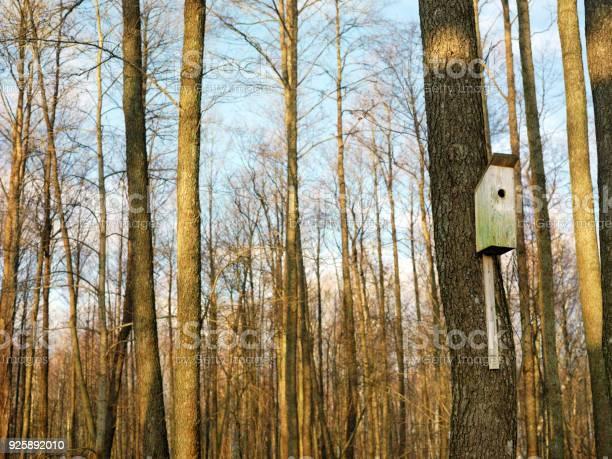 Bird House In Forest