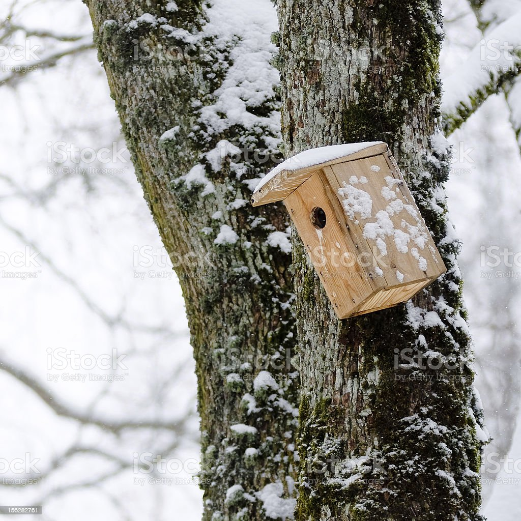 Bird house in winter, hanging on the tree royalty-free stock photo