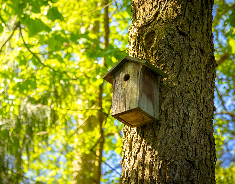 A bird house or bird box in spring sunshine with natural green leaves background
