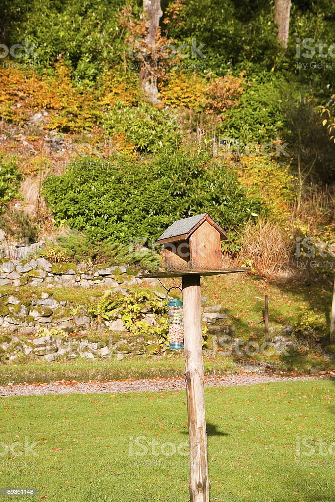 Uccello casa foto stock royalty-free