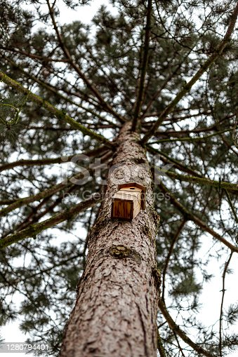 istock Bird house suspended in a tree 1280794401