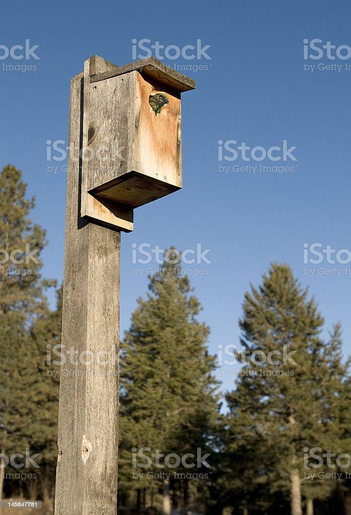 Oiseau maison avec Finch photo libre de droits
