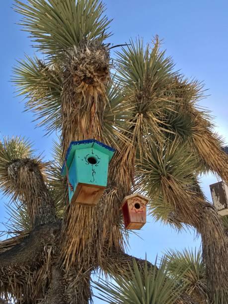 Bird houses stock photo