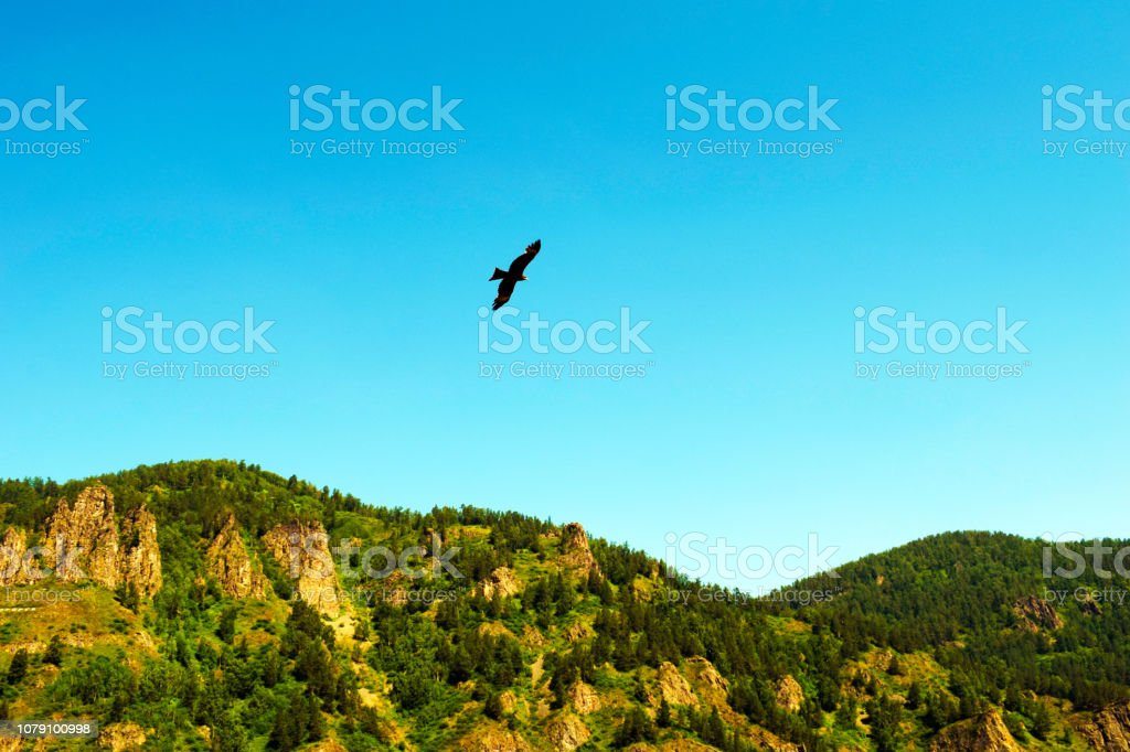 A bird hovering above the ground. Eagle flying over the high...
