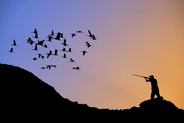 chasse aux oiseaux - colin photos et images de collection