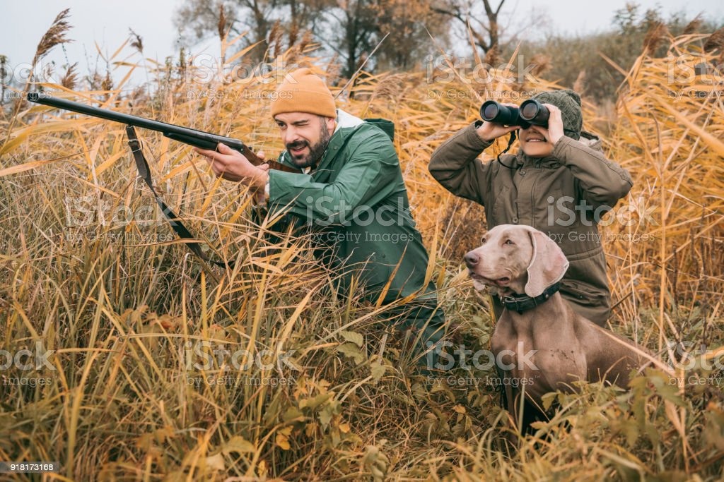 bird hunting stock photo