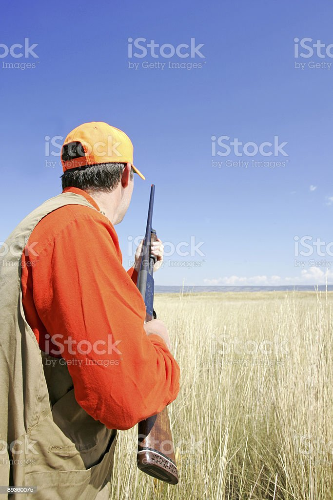 Serie di caccia dell'uccello foto stock royalty-free