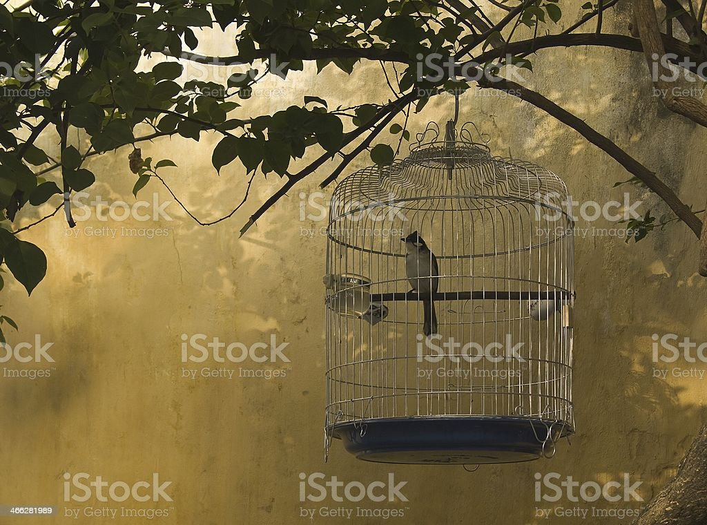 Bird in a birdcage stock photo