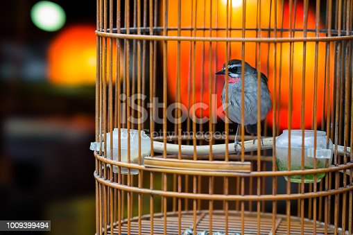 Beautiful little bird in a small birdcage.