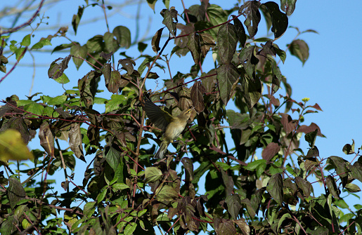 Bird in bosquet