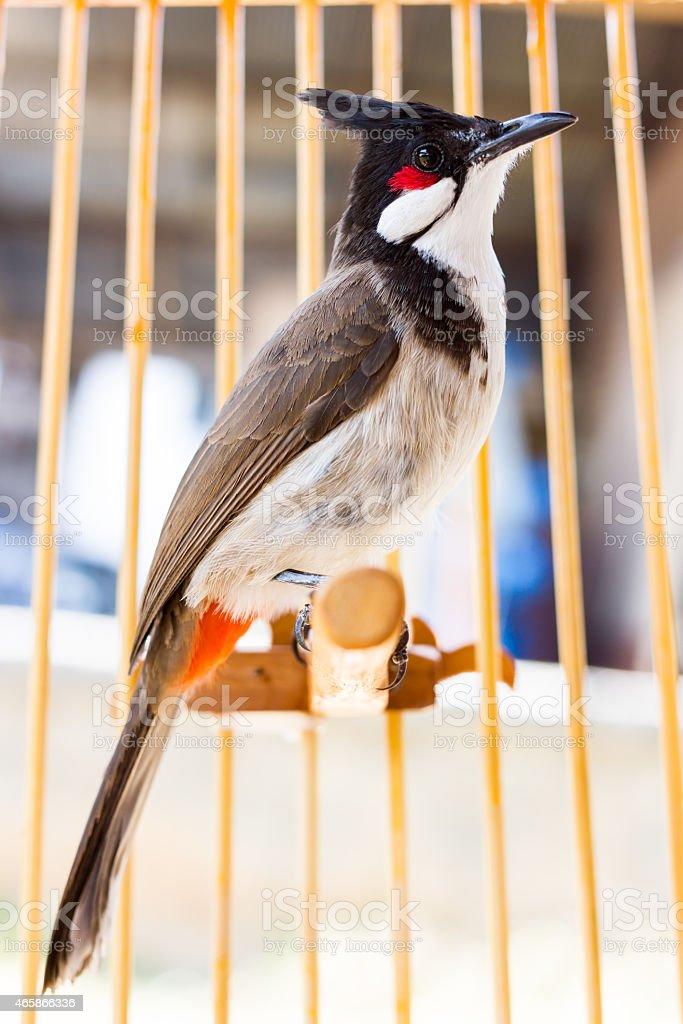 bird-in-Schalter - Lizenzfrei 2015 Stock-Foto