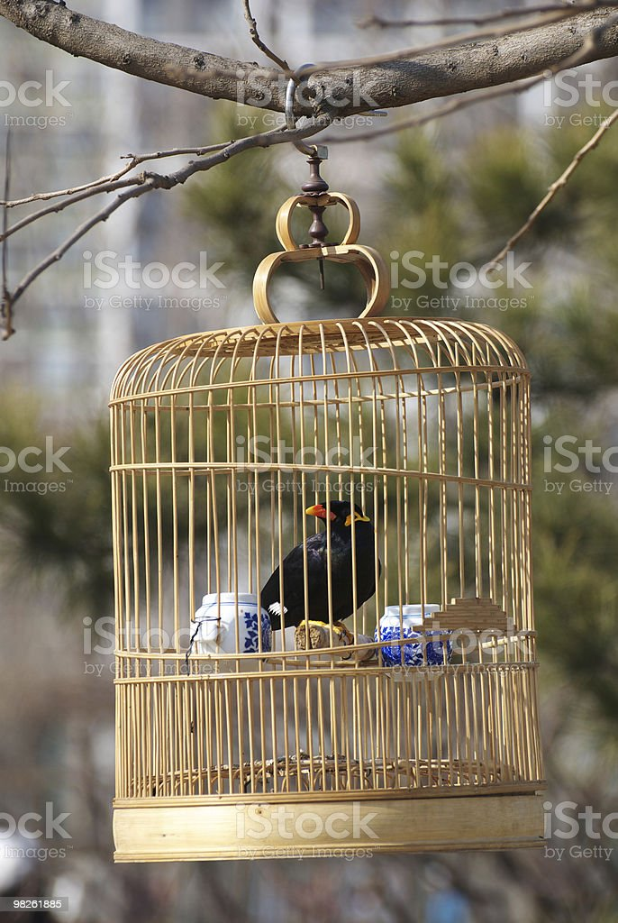 bird in cage royalty-free stock photo