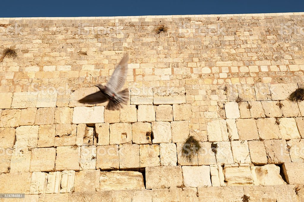 Bird in flight at Western Wall royalty-free stock photo