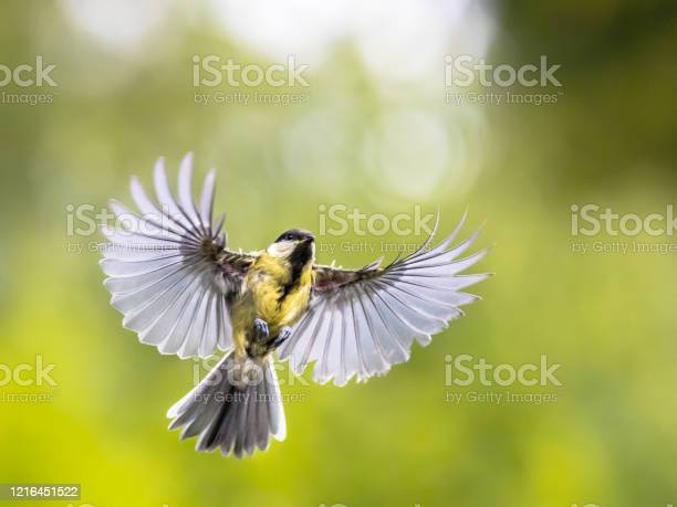 Bird in flight on green garden background with copy space picture id1216451522?b=1&k=6&m=1216451522&s=612x612&h=m42nxr5y skdzxbadp1lyivg7ntxeelgy 344l55il8=