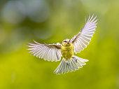 istock Bird in Flight on vivid garden background 1280225413