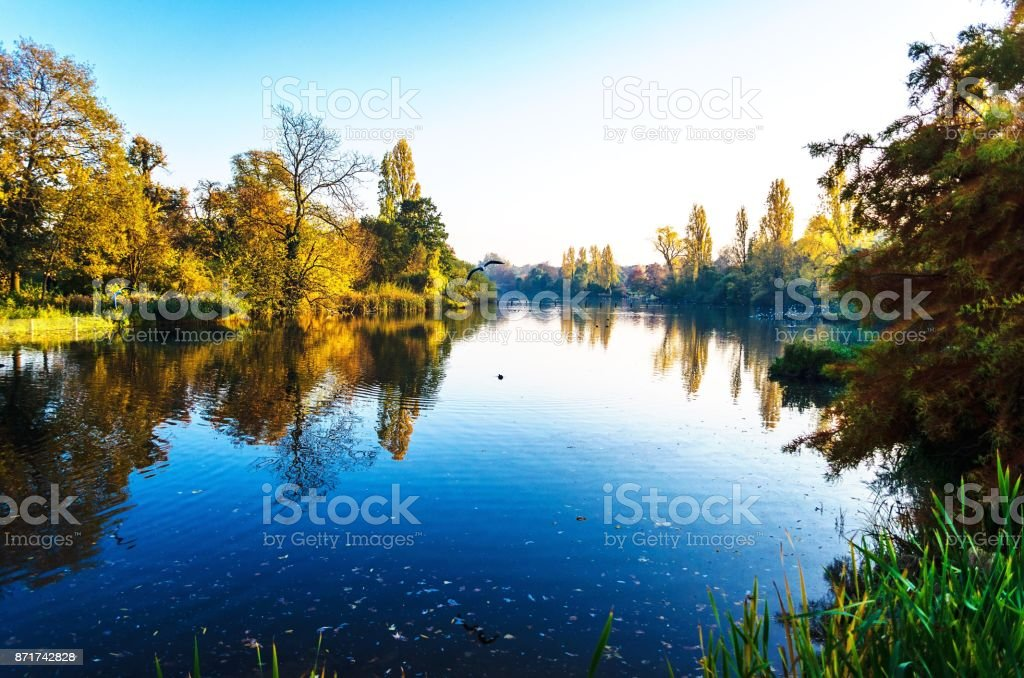 A bird in flight over the Serpentine Lake stock photo