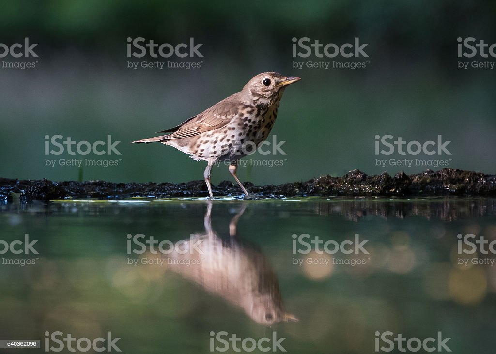 Bird in forest stock photo