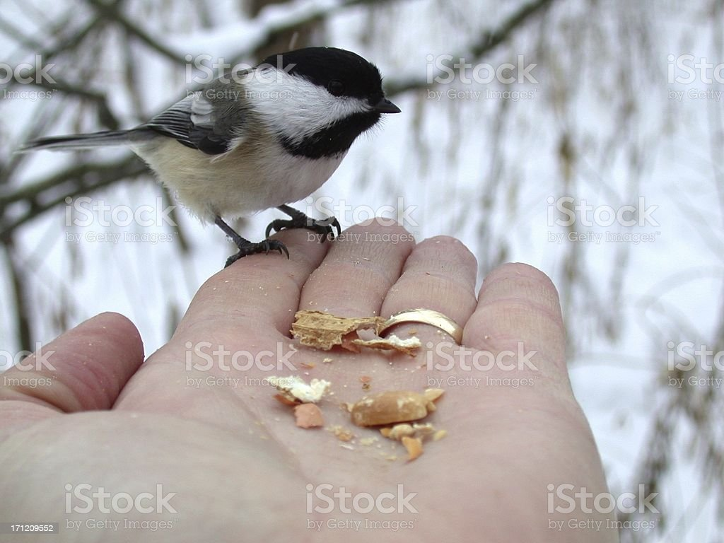 Bird in Hand 1 stock photo