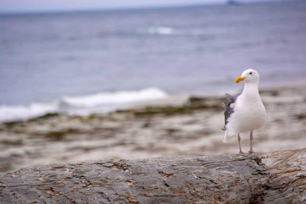 Bird in Monterey stock photo