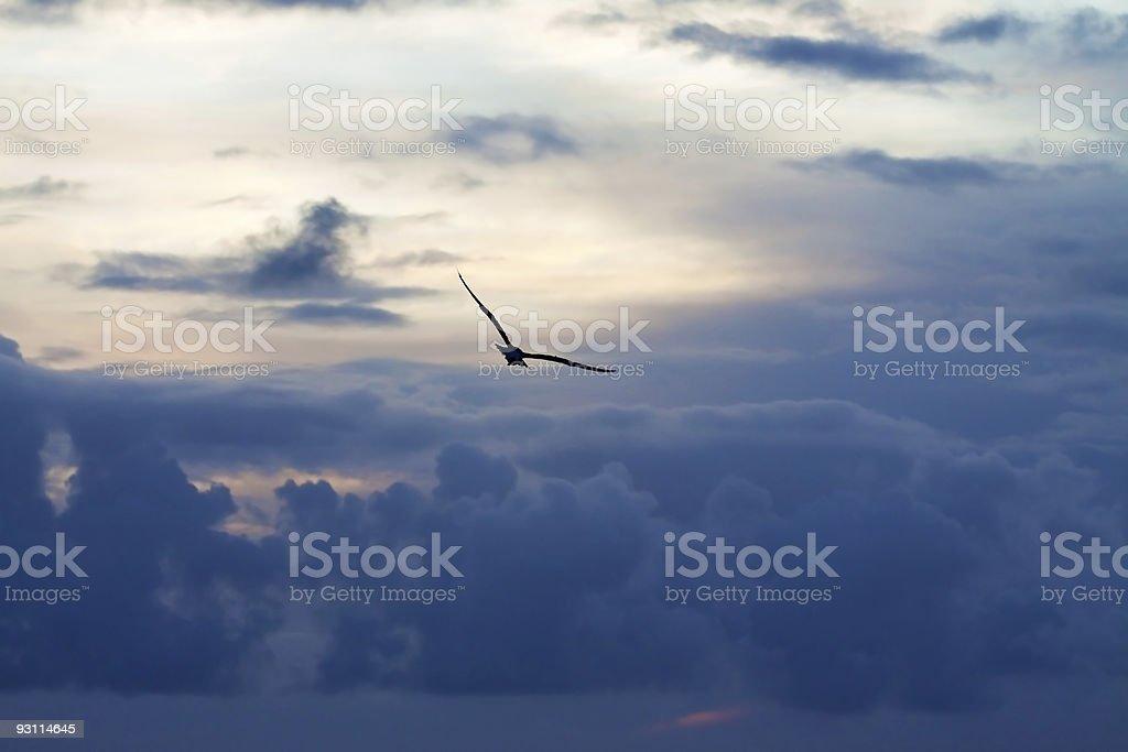 bird in sky - Royalty-free Animal Stock Photo