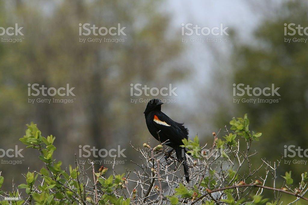 Pájaro en el casquillo foto de stock libre de derechos
