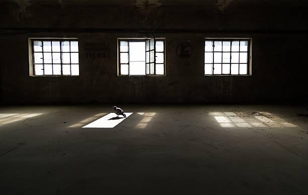 bird in the empty building - fönsterrad bildbanksfoton och bilder