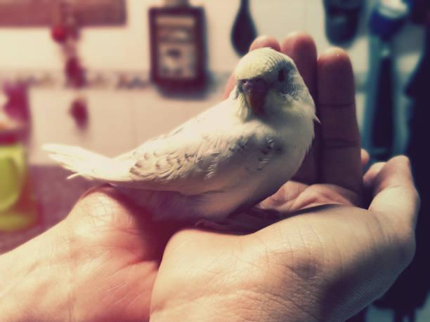Pássaro na mão - foto de acervo