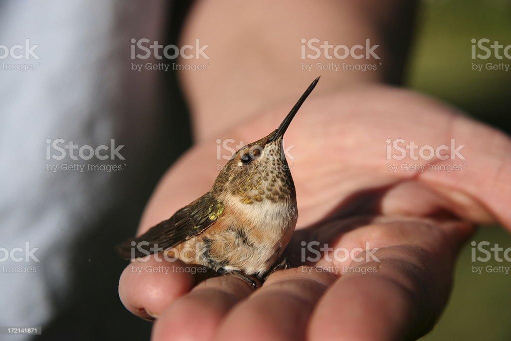 Bird in the hand. stock photo