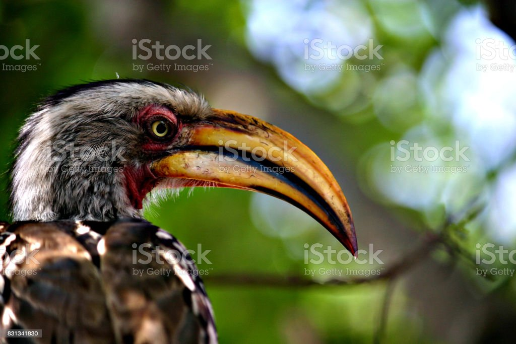 Bird in the Kruger National Park stock photo