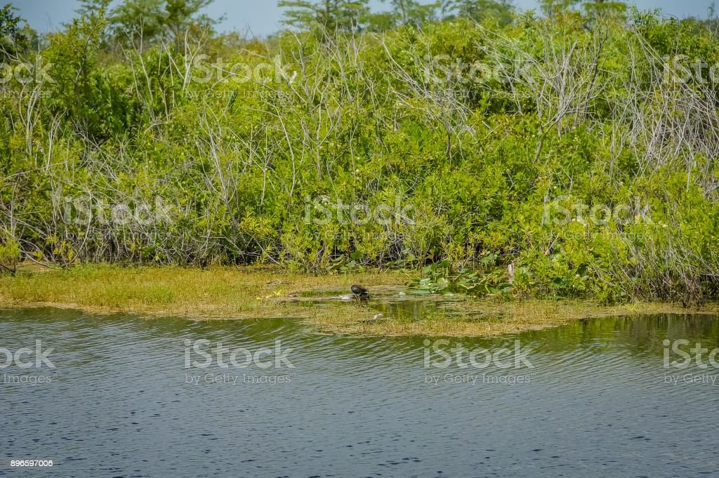 bird in the marsh stock photo