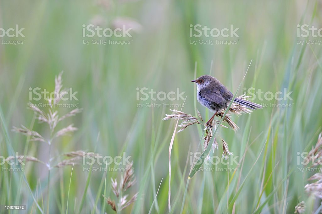 Bird in the morning royalty-free stock photo
