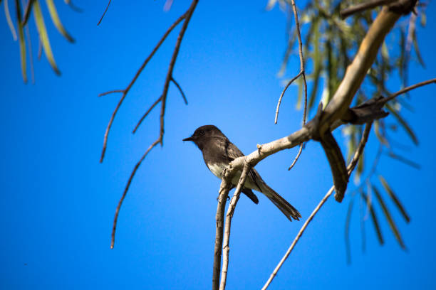 Bird in the sky stock photo