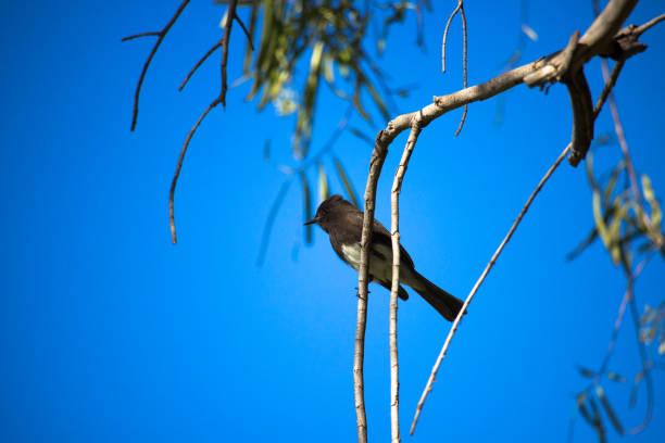 Bird in the Tree stock photo