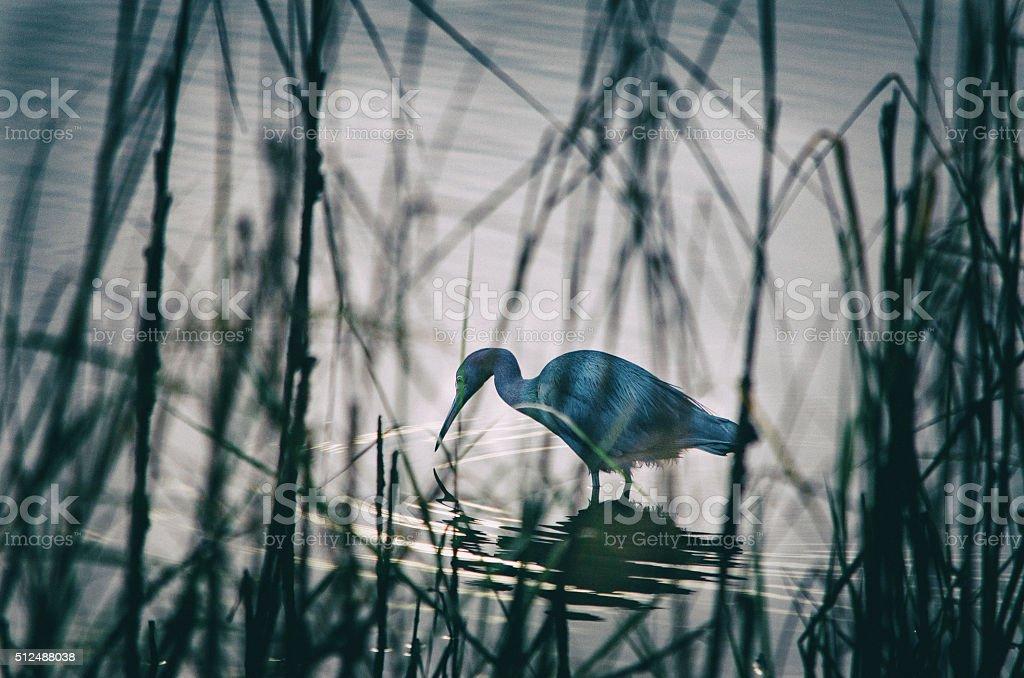 Bird in Water stock photo