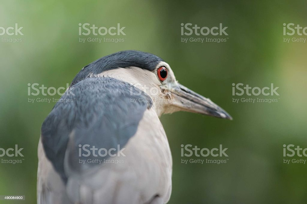 Bird is looking stock photo