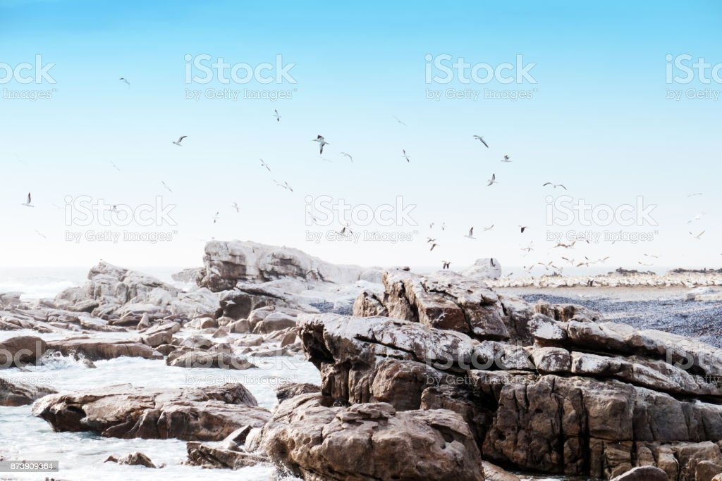 Bird Island Nature Reserve with cape gannet breeding colony, Lambert's Bay , South Africa stock photo