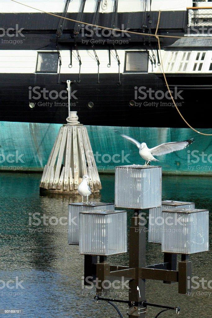 Bird Landing in Front of Boat stock photo
