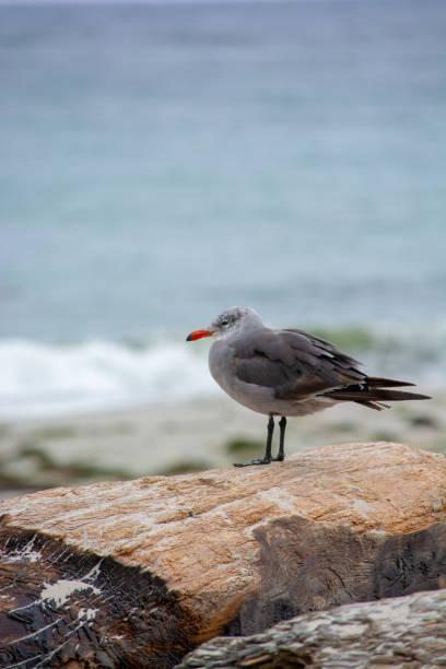 Bird looking into the Pacific Ocean stock photo
