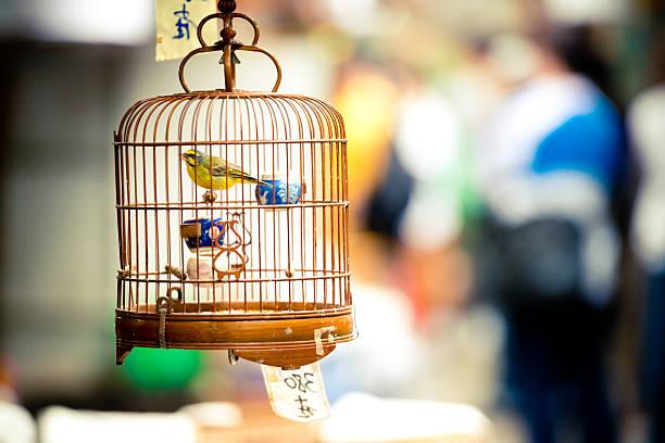 Bird Markt, Hong Kong – Foto