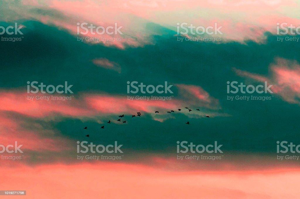 Flock of flying