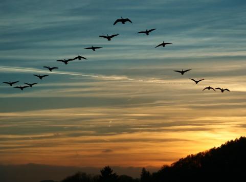 Bird Migration at Sunset