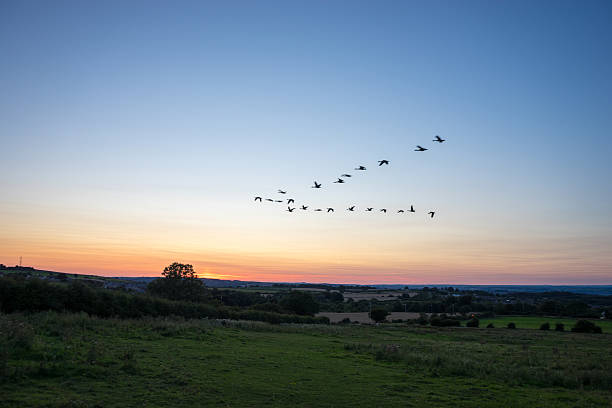 Bird Migration at Sunset stock photo