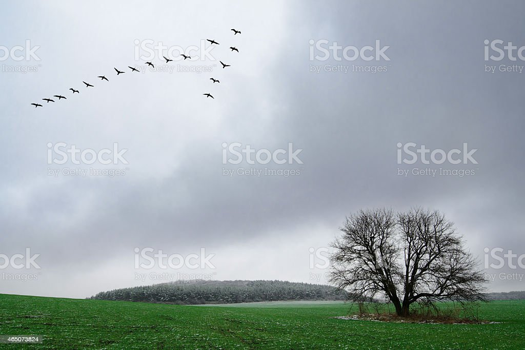 Flock of birds flying over a lonely tree